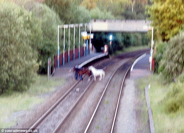 Moment Man Led His Two Horses Across A Railway Line