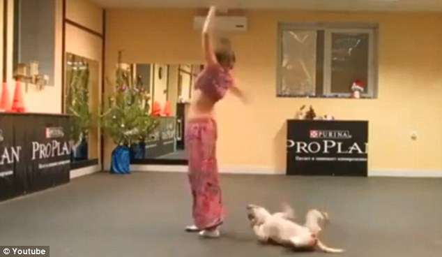 Dog and woman dancing | ozara gossip