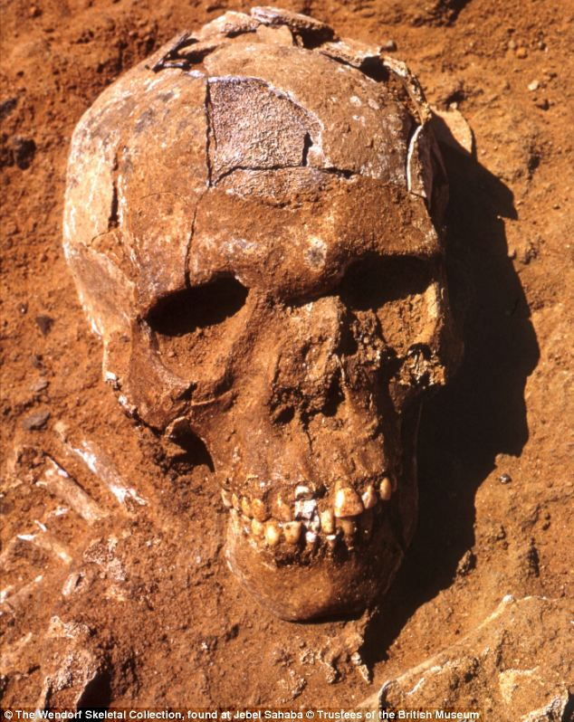 They believe the remains of the 60 individuals found (a skull is pictured) represent the first communal violence between groups because almost half the remains have cut marks on them