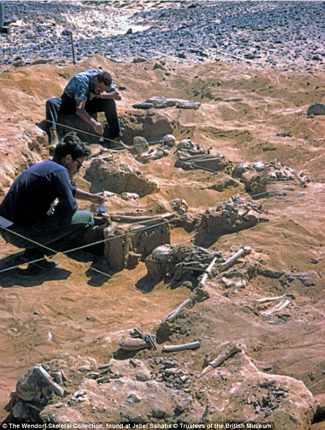 French scientists have been working with The British Museum to examine dozens of skeletons that were found grouped together in the Jebel Sahaba cemetery. An image of excavations at Jebel Sahaba in 1965 is pictured