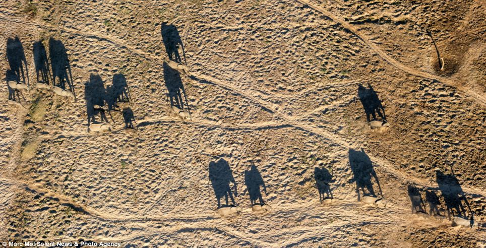 Optical Illusion Wallpaper Hd Family Of Elephants Cast Stunning Shadow Across A Dry