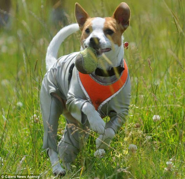 Dog Allergy | Dog Breeds Picture