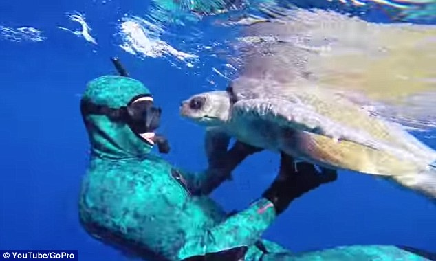 Touching: A sea turtle swims nose to nose with Cameron Dietrich after he freed it from tangled fishing nets