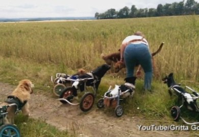 Wheelchairs For Dogs How To Build