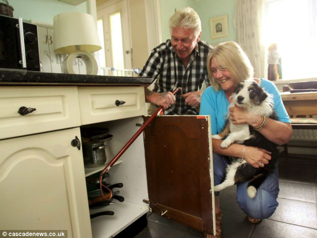 Dog finds 5ft snake hiding in cupboard of an Essex kitchen