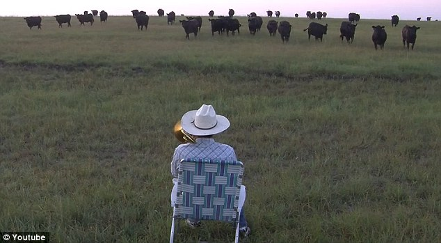 Quite a sight: Indeed, at the beginning of his video he is seen sat in an empty field but as he continues to play cows suddenly crop up on the horizon