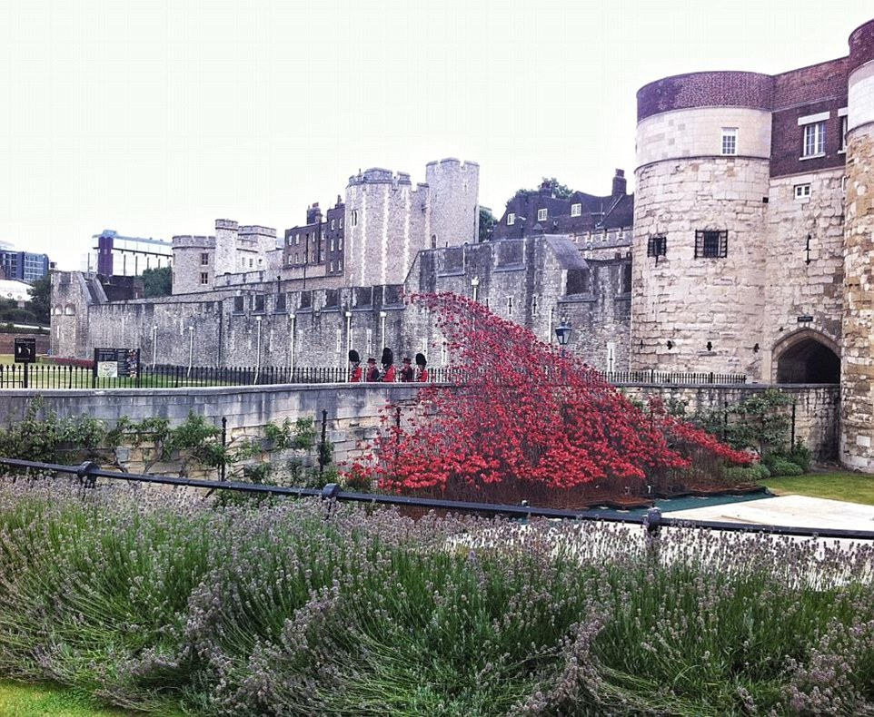 Months of work: The poppies are still being planted across the Tower and the full display will not be completed until Armistice Day this year