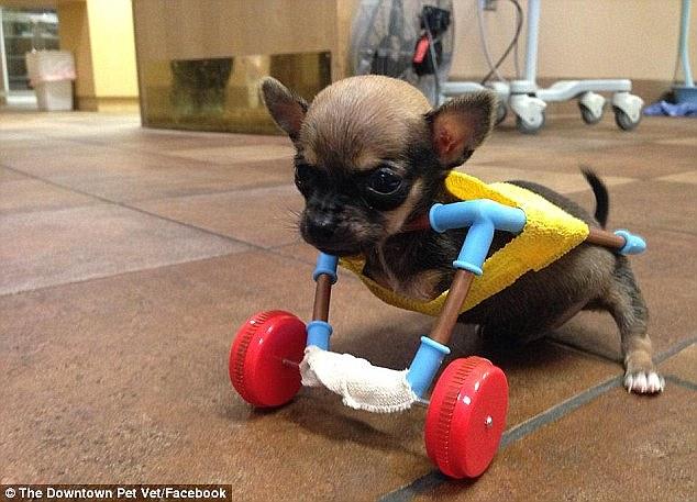 Turbo tornou-se uma sensação na internet depois que a senhorita Looper fez um jogo de rodas de peças de brinquedos peças