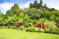 Take gardening inspiration from the Tropics to achieve ...