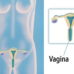 What Is A Diagram In Science Trailer Hitch Wire Just Half Of Women Can Locate The Vagina On Female Reproductive System | Daily ...