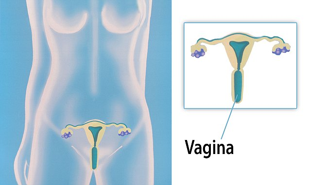what is a diagram in science clarion radio wiring code just half of women can locate the vagina on female reproductive system | daily ...