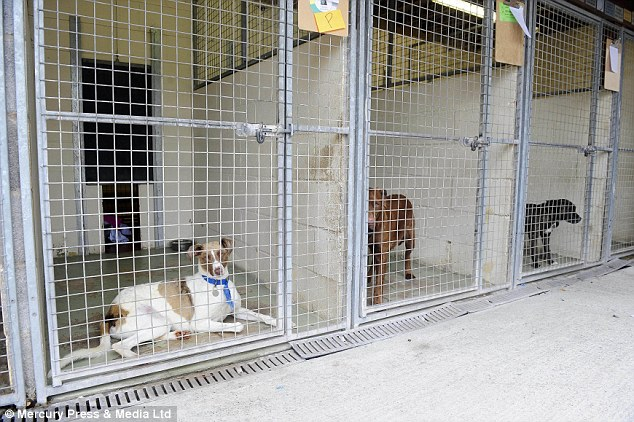 Saved: Dogs not hurt in the fire, Animal charity hit by arson attack | ozara gossip