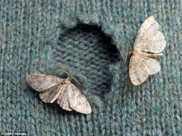 pantry moth larvae how to get rid of