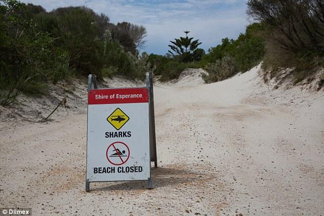 kelpids beach requin