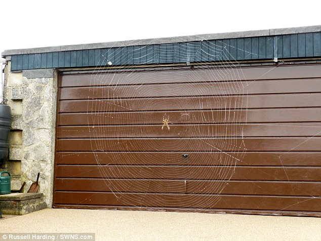 'Mystified': The pensioner couldn't believe his eyes when he stepped outside and saw the six-foot web, which appears even bigger in the angle of this photograph