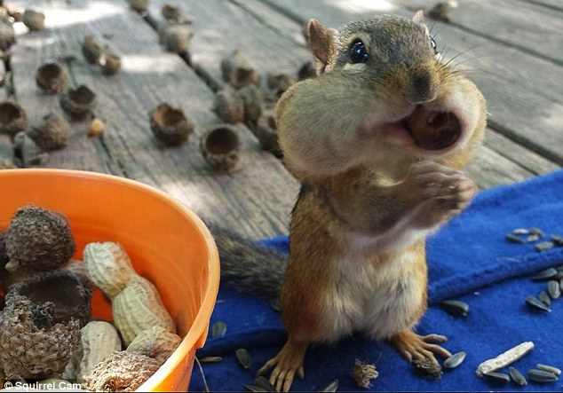 Oh nuts! Furry little creatures have become the stars of their own reality TV show thanks to Squirrel Cam