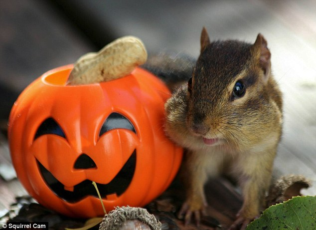 Halloween: October is the prime time for these fuzzy creatures to stock up before the weather takes a turn for the worst
