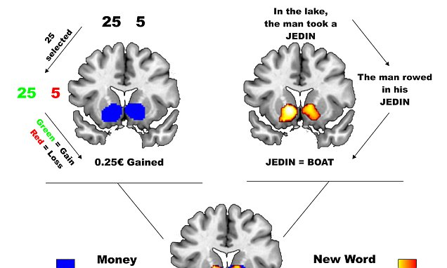 Learning a new language activates same part of the brain