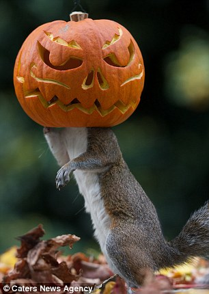 Squirrel gets head stuck in a Halloween pumpkin in London  Daily Mail Online