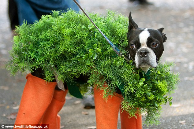 See adorable animals dressed up for Halloween