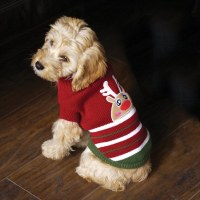 Pottiest pet pressies: Reindeer costumes for dogs ...