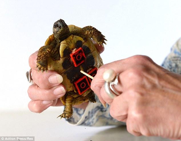 Shell de um trabalho: As peças de Lego foram equipados para o estômago de Blade, antes que as rodas foram anexadas