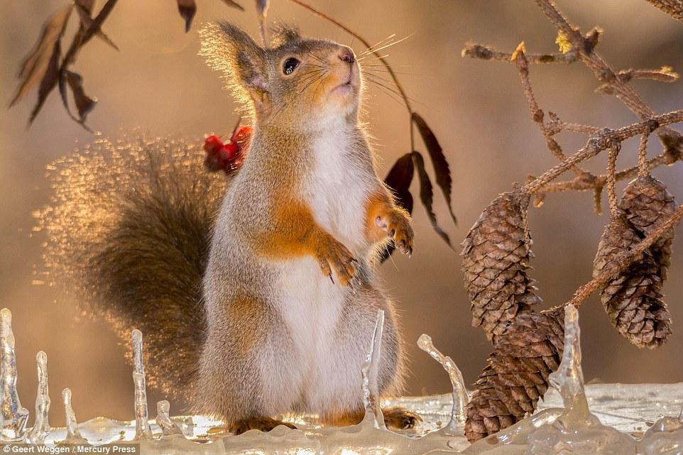 Photographer Geert Weggen Captures Beauty Of Red Squirrels