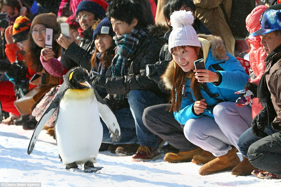 Image result for penguin tourist