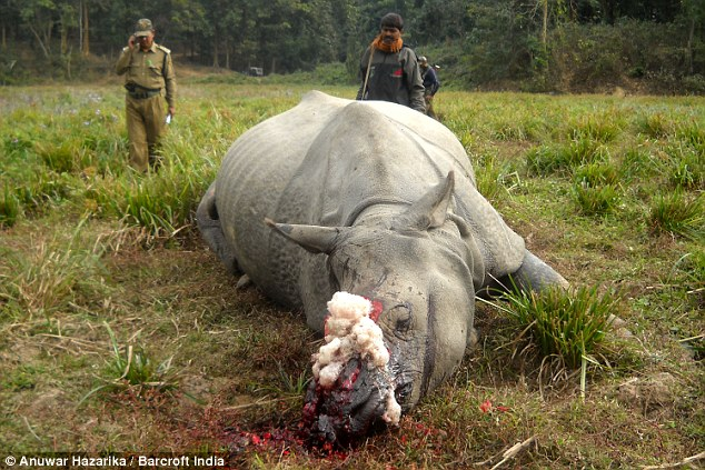 Second One-horned Rhino In The Space Of A Month Butchered
