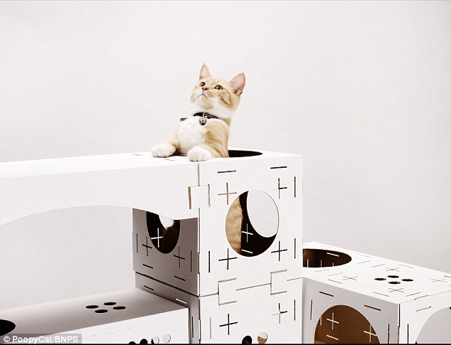 cardboard homes for cats