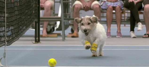 Billed as the 'best ball boys in the word', the obedient dogs proved to be better than the real thing