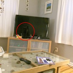 Hiding Tv In Living Room Color Schemes For Rooms With High Ceilings Woman Spent 10 Minutes Looking Her Cat This ...