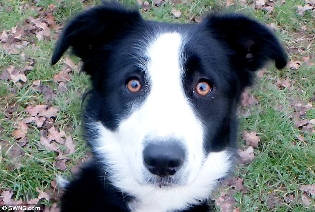 Dog With Different Coloured Eyes Struggles To Find A Home