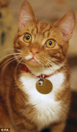 Cat kept at Winston Churchills Chartwell estate is barred