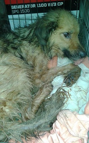 This dog was saved from appalling conditions in a Romanian dog shelter where animals were forced to eat each other to stay alive