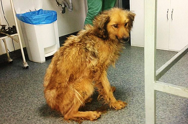 Saved: This dog was one of the lucky ones as it was still alive when Nicolae Vasile arrived at the shelter and discovered the appalling conditions
