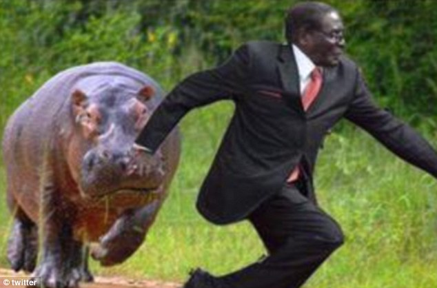 Run, Robert, run: Considering the hippo is one of the world's deadliest animals, Mugabe did right in running