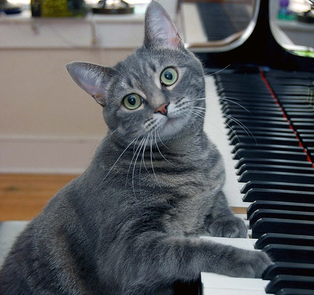 Image result for cats and music