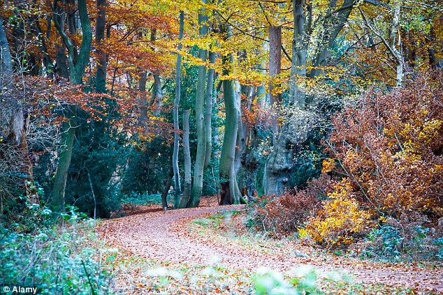 In an authoritative new study, scientists have calculated that the total vegetation on the planet increased substantially between 2003 and 2012. Above, a stock image of Epping Forest in London