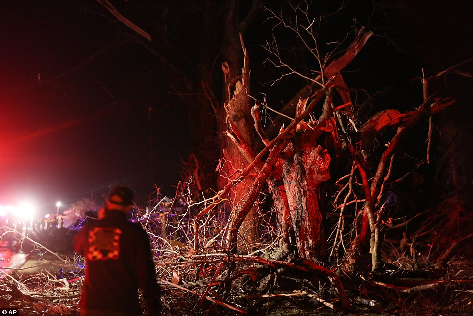 Uprooted: Trees are mangled on Highway 72. Supercell thunderstorms produced a large tornado that touched down Thursday night in northern Illinois