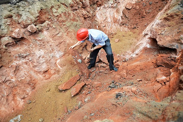 Carefully done: A workman examines the fossils that have been preserved by the red sandstone