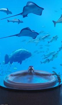 Dubai' Underwater Suites With Views