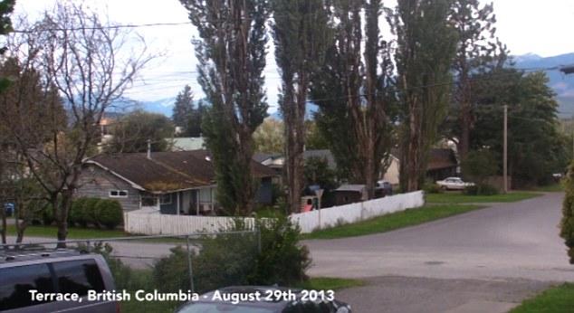 Como el viento sacudió los enormes árboles en Columbia Británica, los sonidos misteriosos fueron grabadas por un residente de pensamiento rápido