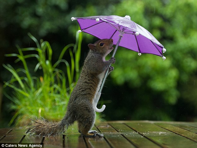 Umbrella Mini Camera