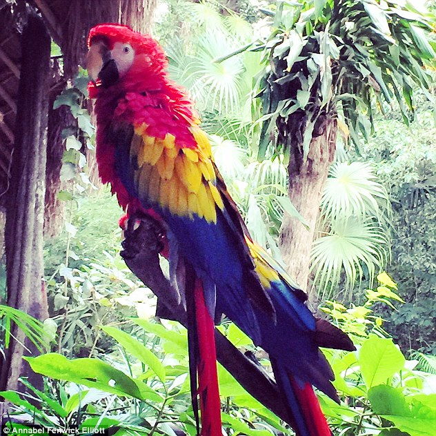 The trees were filled with bird-life, as this stunning macaw parrot demonstrates