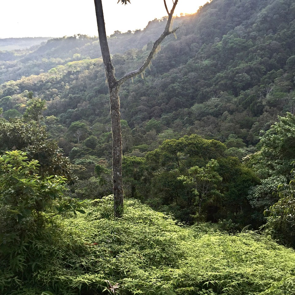 I was treated to the treetop villa, which was set a little way up the hill from the main compound, with a view nothing short of spectacular