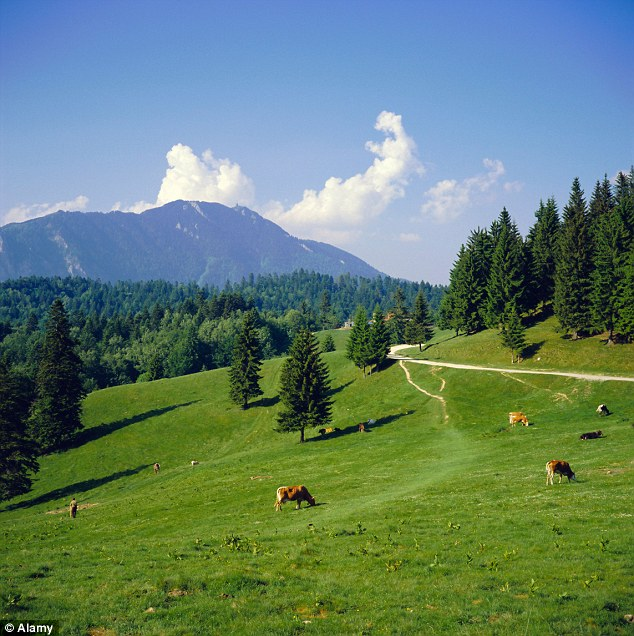 Scenic: Romania's Carpathian Mountains are every bit as idyllic as the Alpine pastures of Austria