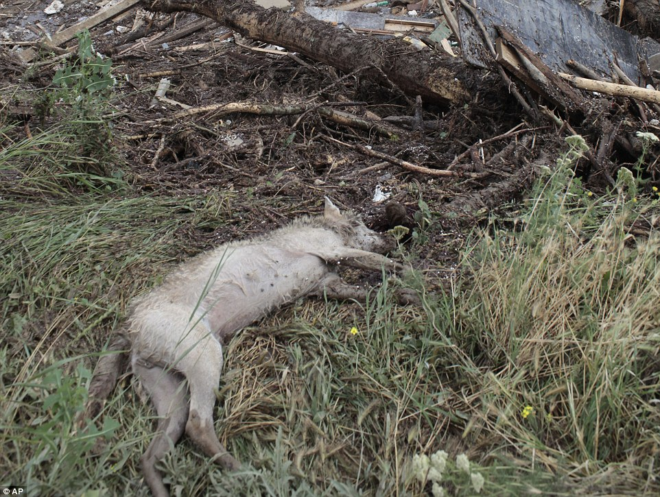 The body of a dead animal lies in the grass outside a flooded zoo in Tbilisi. Heavy flooding destroyed many of the enclosures inside the zoo
