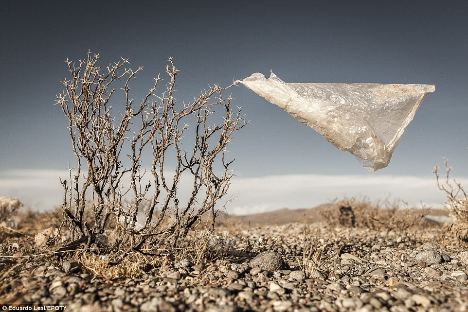 Although strangely simple, this plastic bag snagged on a tree in the Bolivian Altiplano delivers a powerful message about the accumulation of plastic bags in the environment. The world consumes over one million plastic bags every minute