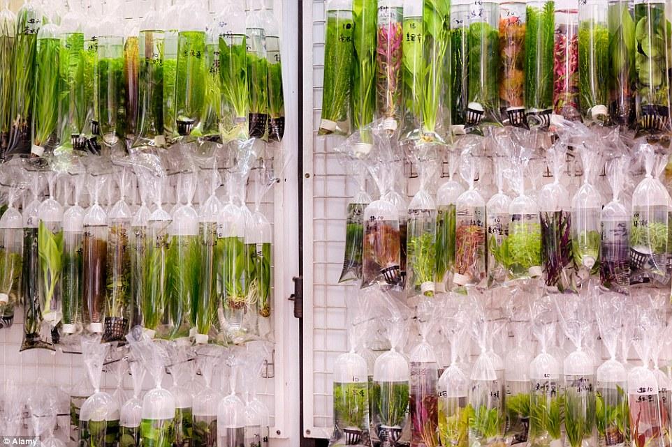Aquarium Plants Uk